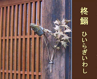 hiragiiwashi2