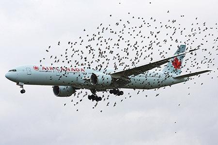 飛行機のバードストライク原因