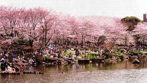 隅田川 両岸の桜