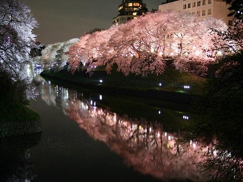 隅田公園桜まつり ライトアップ画像: