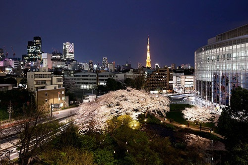 六本木ヒルズ 桜のライトアップ2
