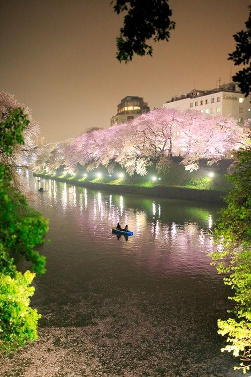 千鳥ケ淵公園 花見 ライトアップ2