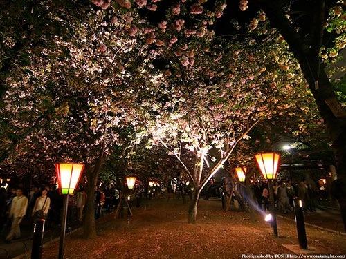 造幣局 桜の通り抜け2014はライトアップあり