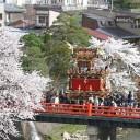 takayamamaturi-sakura