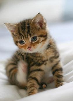 こんな可愛い子猫の写真がたくさんあります。