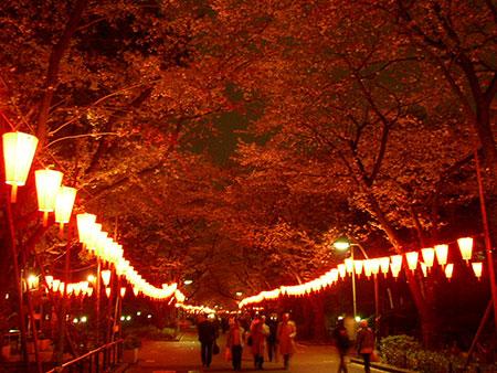 桜まつりライトアップの様子