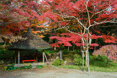 関東で本格的に見頃を迎えるのは10月下旬~