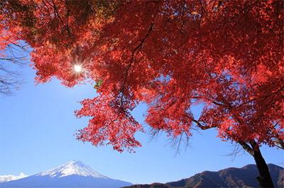 「日本一遅い紅葉」としても知られる観光スポット