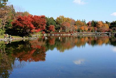 国営昭和記念公園の紅葉
