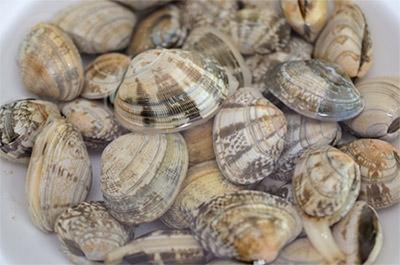 大きくて美味しい食べごろの貝をとりたいなら3~5月頃が特にオススメです!