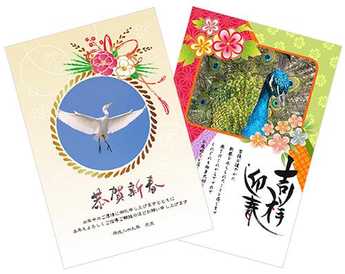 鳥の写真が入った年賀状画像