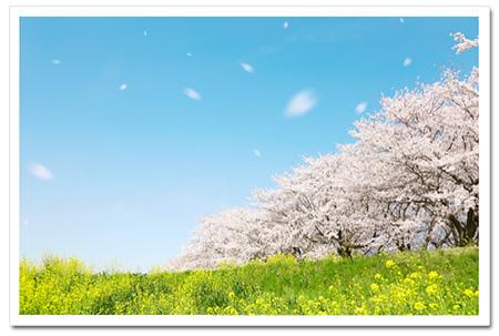 一度は見に行ってみたい!桜が有名なおすすめ場所をご紹介