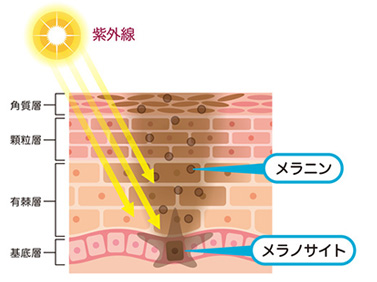男性だって、本当は日焼け止めや、紫外線の対策は必要なんですよ。
