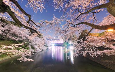 幻想的な魅力!東京のライトアップ夜桜2017年のおすすめは?