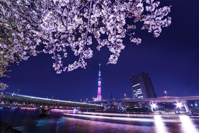 夜桜の魅力