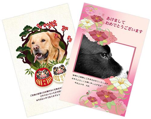犬の写真が入った年賀状画像