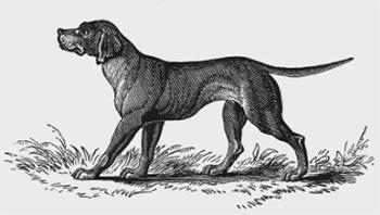 犬の版画風イラスト