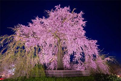 円山公園(京都府)