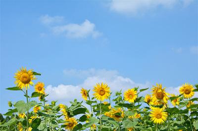お中元の時期は7月初旬から8月中旬お歳暮の時期は12月10日から20日