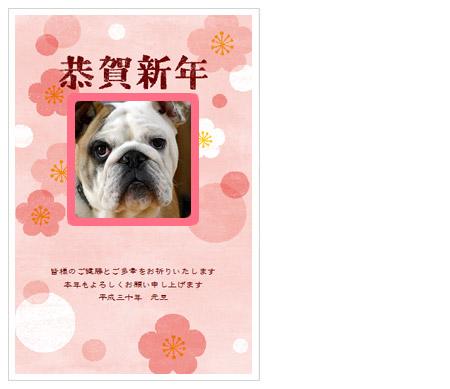 犬の写真入り年賀状完成1