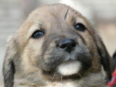 犬のアップ写真