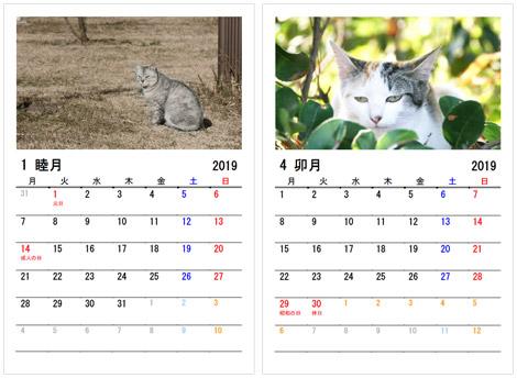 猫の写真はシュールな感じ、良く言えば自然体のネコちゃん
