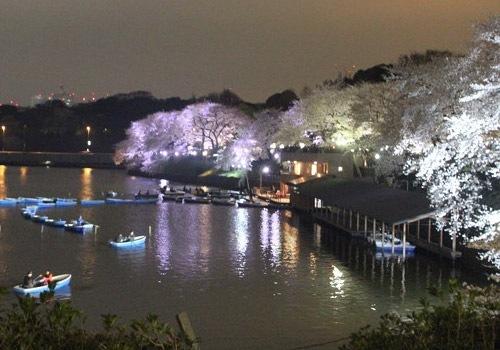 ボートからの千鳥ヶ淵夜桜は絶景