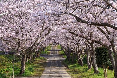 都内の桜スポットから「上野公園」をご紹介