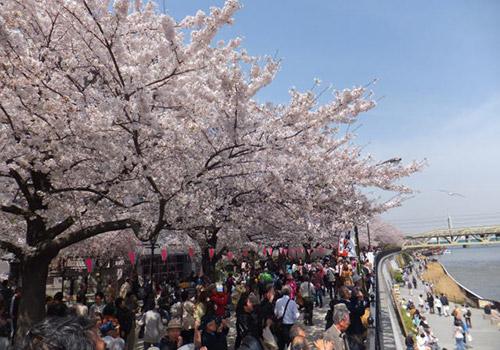 隅田公園で宴会をしたい場合は早めの場所取りが吉!