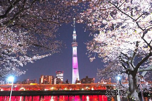 桜まつりの期間中は夜はライトアップがあります。