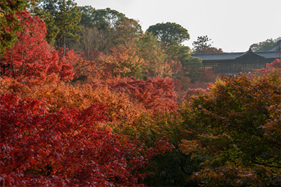 東福寺の紅葉 見頃:11月下旬~12月上旬