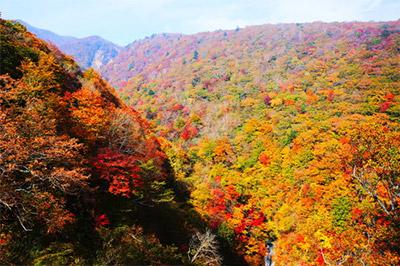 那須高原の紅葉 見ごろ:10月中旬~10月下旬