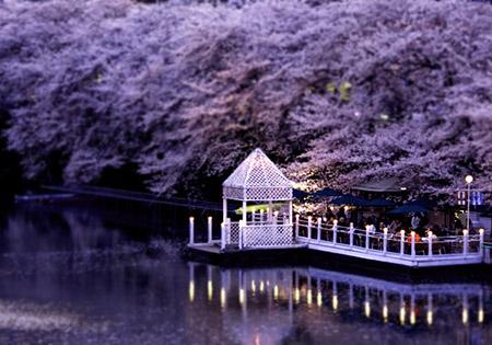 桜を天井に、お食事と川沿いの景色を楽しめられます