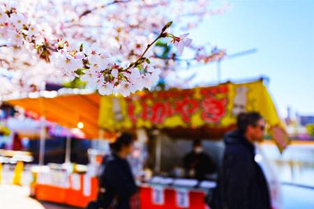 ふくい桜まつりの見どころ