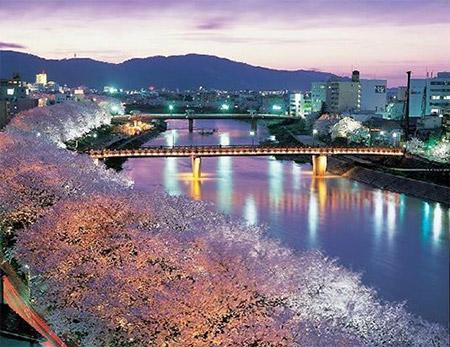 ふくい桜まつりの見どころの一つが夜桜
