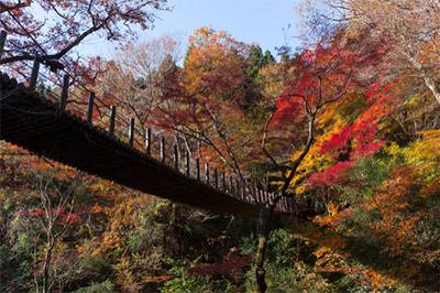花貫渓谷 汐見滝吊り橋からの紅葉 見頃:11月中旬~11月下旬