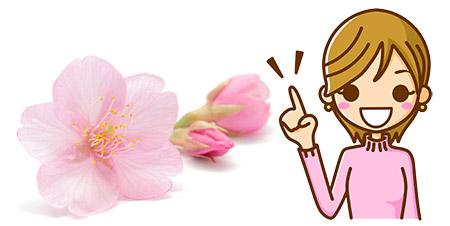 桜前線2021 桜の開花時期