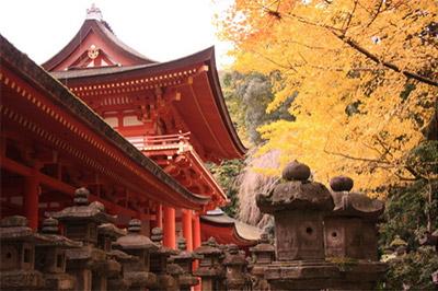 緑豊かな原始林に囲まれるように、鮮やかな朱塗りの社殿があります
